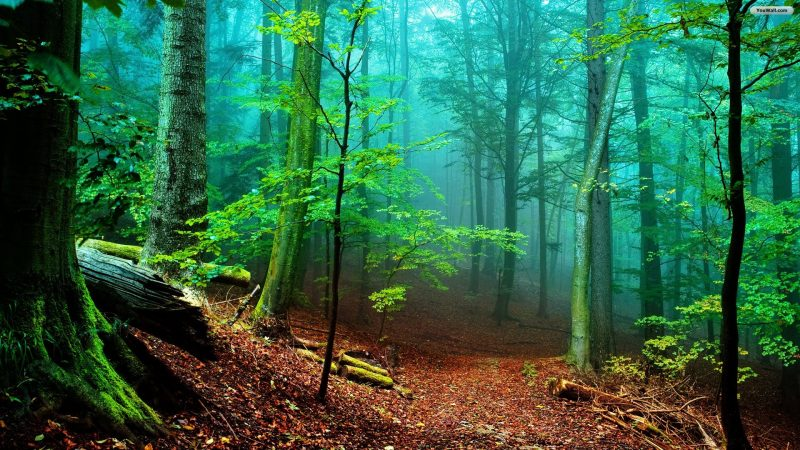 forest-wegweg